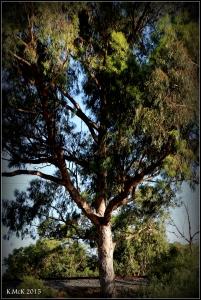 daglish trees_25