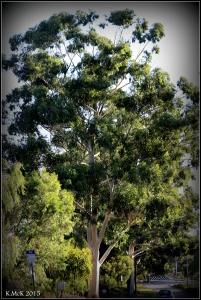 daglish trees_3