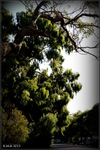 daglish trees_4
