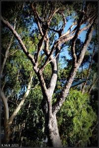 daglish trees_8