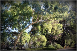 daglish trees_9