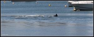 dolphin_10