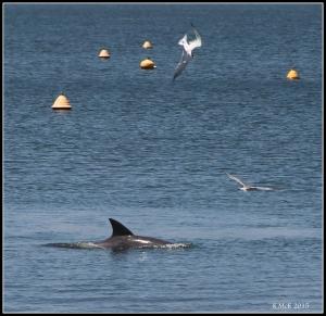 dolphin_14