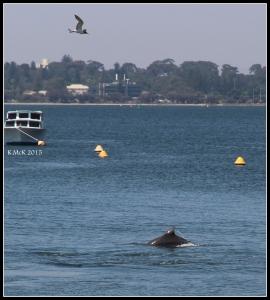 dolphin_16