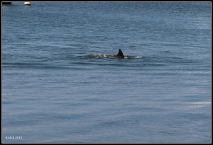 dolphin_17