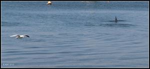 dolphin_18