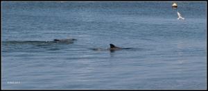 dolphin_20