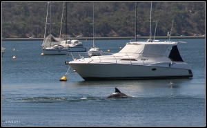 dolphin_7