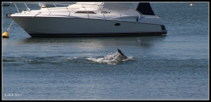 dolphin_8