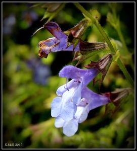 flowers_3