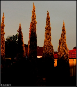 sunset_trees_1