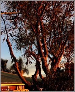 sunset_trees_2