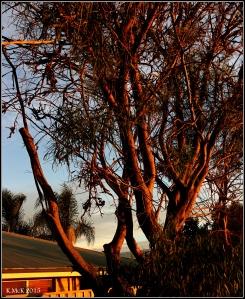 sunset_trees_2