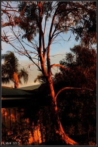 sunset_trees_3