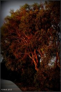 sunset_trees_4
