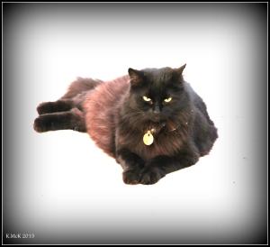 cat_9