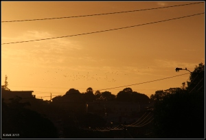 sunset and birds_2