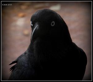 birds_7