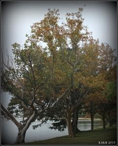 trees_4