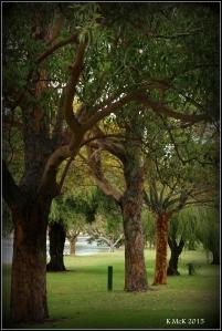 trees_5