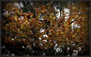 trees_7