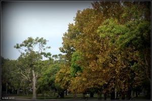 trees_8