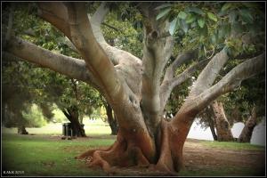 trees_9