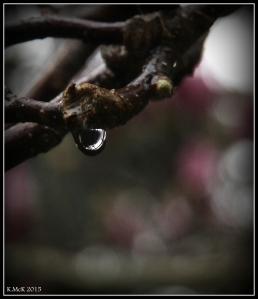araluen_drops_12