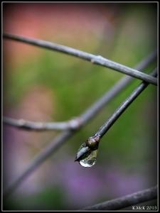 araluen_drops_17