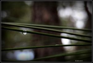 araluen_drops_20