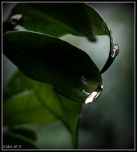 drops_4