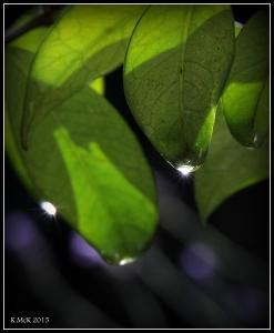 drops_8