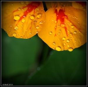 drops_9