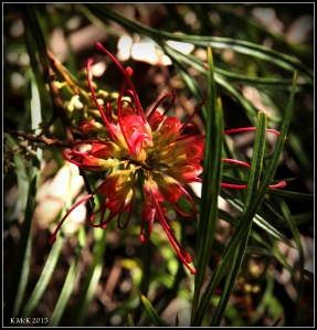 flower_17