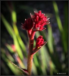flower_19