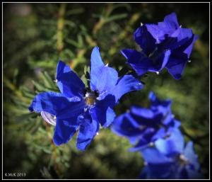 flower_hp_1