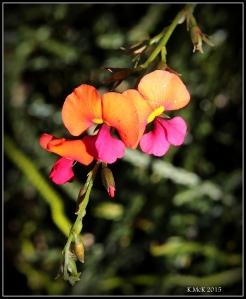 flower_hp_12