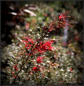 flower_hp_17