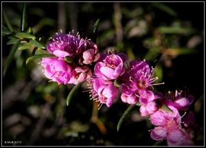 flower_hp_2