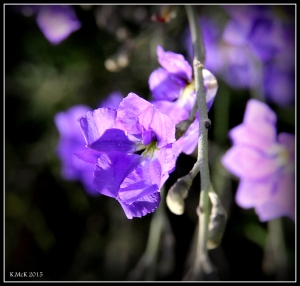 flower_hp_24
