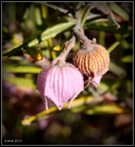flower_hp_27