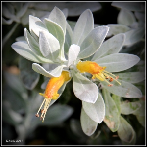 flower_hp_30