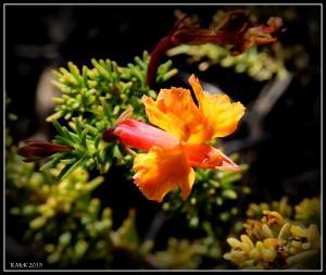 flower_hp_4