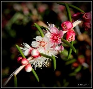 flower_hp_8
