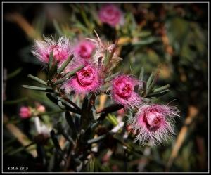 flower_hp_9