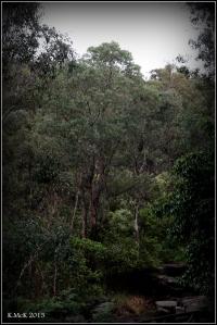 trees_12
