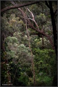 trees_14