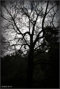 trees_17
