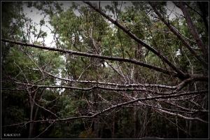 trees_18