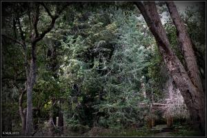 trees_21
